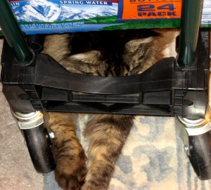 Shy Kitty