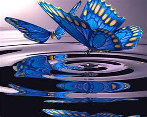 Butterfly Pool - Author Unknown