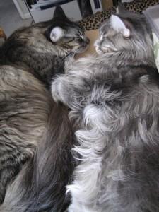 Sweet Napping Kitties