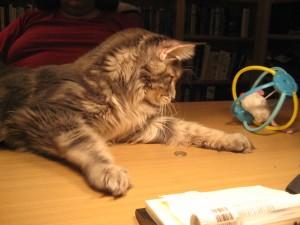 Kitten At Play (2) - Tsunami at Create With Joy