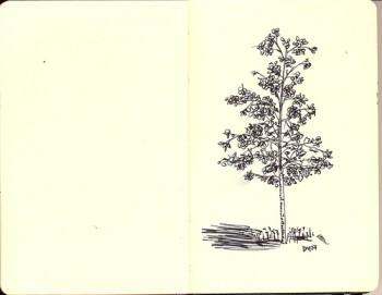 Line Drawing - Tree