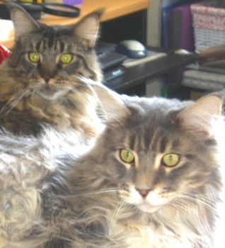 Two Alert Cats