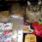Legend - One Crafty Kitty