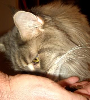 Natural Balance Perfect Cat Treats - Salmon 1