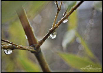 Hood Photography - Rain Returns