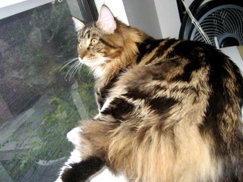 Magellan - Bird Watching (with Reflection)