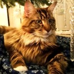 Magellan - First Christmas - 2