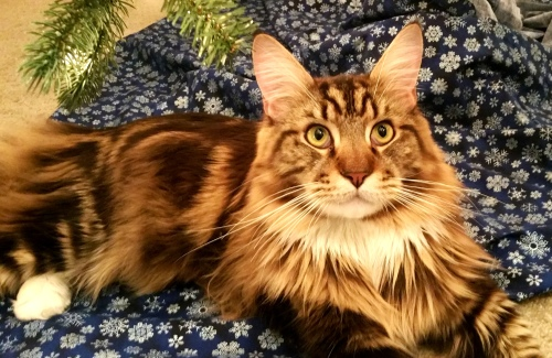 Magellan Under The Christmas Tree - Majestic