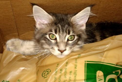 Tsunami - Cats And Bags 1