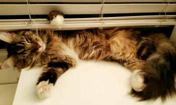 Magellan - Sleeping Kitty