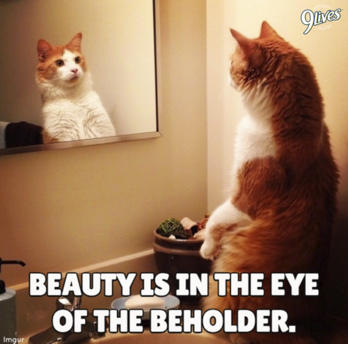 All Cats Are Beautiful