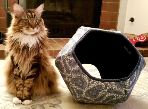 Magellan Poses With His New Cat Ball