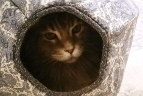 Tsunami in the Cat Ball