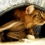 Magellan In His Cat Ball
