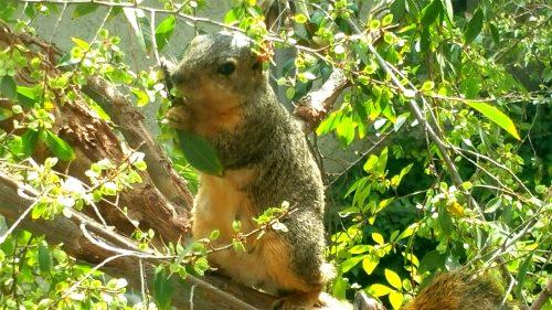 squirrel-watching
