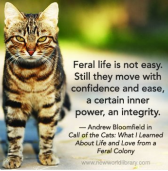 Feral Cats Quote