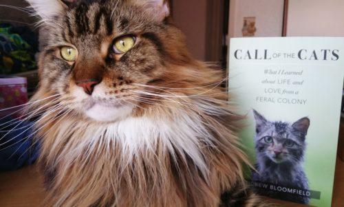Magellan-Shares-Call-Of-The-Cats-Create-With-Joy.com