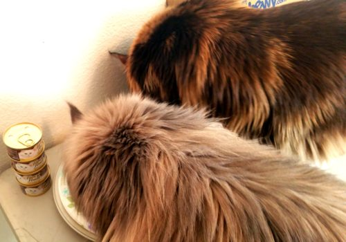 Two-Cats-Fancy-Feast-Create-With-Joy.com