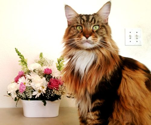 Magellan - Flowers