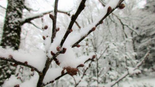 Snow Days De Tout Coeur Limousin
